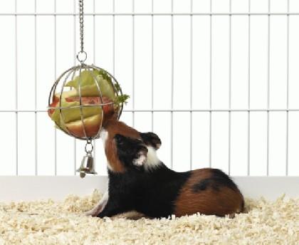 Food-Ball