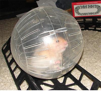 Hamster bal