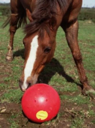 voerbal voor paarden